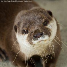 Das otter haus photos | Das Otterhaus 【カワウソ舎】 | 姫路セントラルパーク