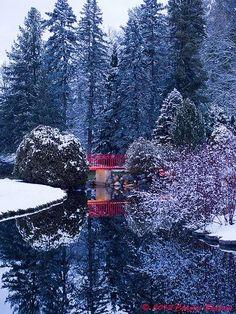 Dow Gardens in winter  -  Midland, MI