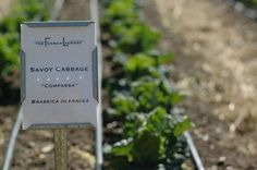 The French Laundry Garden  - veggie garden markers - with printable outdoor paper