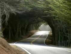 Blog des Smootards Lurrons: Ailleurs ..............vraiment sous les bois !