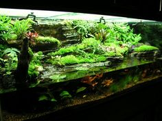 Gradual change in land height from the water's edge - natural Paludarium