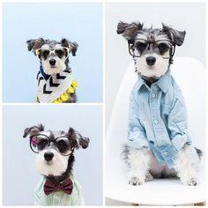 Las mascotas, el nuevo reclamo favorito de la moda - Harper's Bazaar