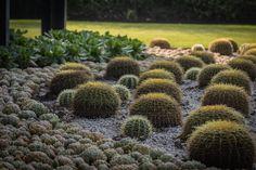 Increible mecla de texturas con diferentes suculentas, biznagas, polvo de mármol y un arreglo orgánico. Plants, Succulents, Flora, Plant