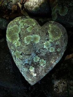 ♥ Amor y Corazones ♥ lichen stone Heart In Nature, Heart Art, I Love Heart, With All My Heart, Caillou Roche, Heart Shaped Rocks, Love Rocks, Arte Floral, Love Symbols