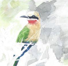 Bee-eater, Selous, Tanzania.