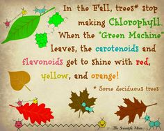 Why do leaves change color in Fall? It all has to do with chemistry! Colorful molecules are in the leaves all year round, it's only when the Chlorophyll stops being produced that you can see them!