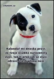 All breeds are special and they all deserve a happy life! Animal Lover Quotes, Animals And Pets, Cute Animals, Judge Me, Happy Birthday Quotes, Alter, Motto, Happy Life, Bullying
