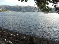 Akaroa. 2 hours South of CHCH. French Colonial town.