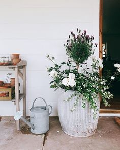 The Best Ideas for Creating Stunning Summer Flower Pots Boxwood Avenue Lavender Planters, Flower Planters, Lavender Potted Plant, Container Plants, Container Gardening, Succulent Containers, Container Flowers, Vegetable Gardening, Small Flowering Plants