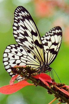 butterflies, so pretty!