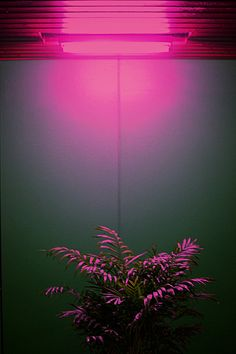 coloured lighting to highlight plants or cornicing