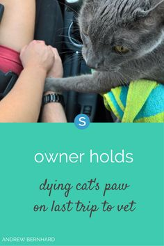 """Andrew Bernhard was crying as he drove to take """"Little Andrew"""" the cat to the vet for the very last time. He held his cat's paw on their final ride."""