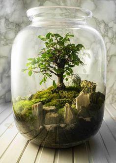Terrarium Jar, Terrarium Plants, Succulent Terrarium, Plants In Jars, Plant In A Jar, Indoor Garden, Indoor Plants, Fairy Garden Pots, Growing Moss
