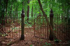 Abandoned cemetery in Halifax County, NC <3