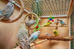 Zabawki dla ptaków