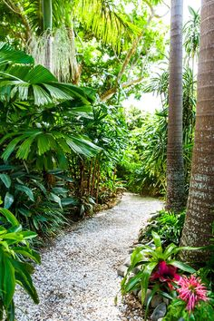 Towering palms and vast thickets of tropical plants stretch out in every direction, creating a rainforest feel. | Photo: Scott Hawkins | Story: Australian House & Garden