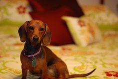 Pretty Weenie :)