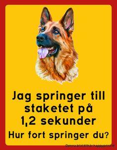 """""""Skylt Schäfer: Jag springer till staketet på 1,2 sek, hur fort springer du? porträtt"""" Finns i två storlekar STOR 350x450 mm, LITEN 175x225 mm.  5 mm hårdplast."""