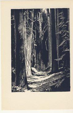Image result for vintage pen and ink illustration