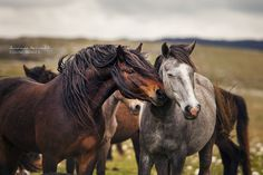 """equine-images: """" Tenderness 