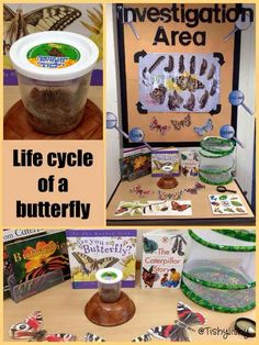 Butterfly lifecycle investigation from Tishylishy