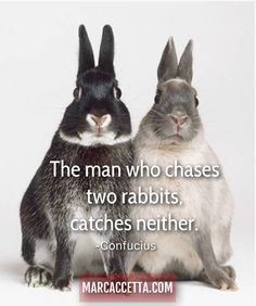 The man who chases two rabbits, catches neither. -Confucius #rabbit #truth #quotes #quotestoliveby