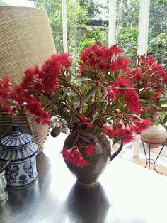 Aussie Christmas flowers  - tis the season to be jolly