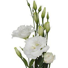 Lissianthus White Flower