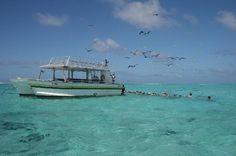 Bora Bora, French Polynesia: Shark Feeding