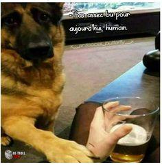 Quand même le chien veut que tu arrêtes de boire... - Be-troll - vidéos humour, actualité insolite