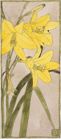 Yellow Daylily (circa 1915). Watercolour and ink by Hannah Borger Overbeck (1870-1931). Image and text courtesy LACMA.