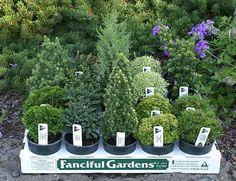 Plants for Fairy Garden