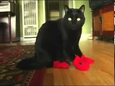 Cats in Booties