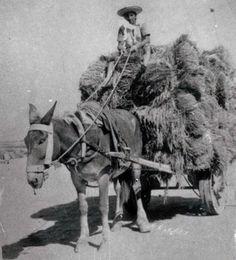 Del trineo al carro plano, que a veces, cuando el terrenoestaba seco entrábamos directamente a cargar y de allí a la era.