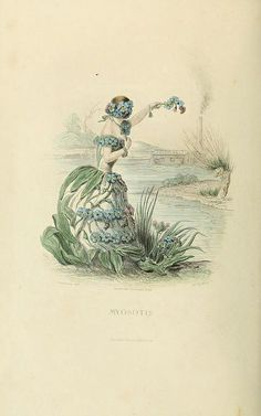 The Flowers Personified (1847). Images by the great Parisian cartoonist J.J Grandville from his Les Fleurs Animées – his last work, originally published posthumously in 1847, the year of his death.