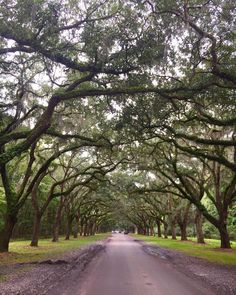 Walking down the driveway at Wormsloe State Historic Site is like stepping into a storybook. ✨