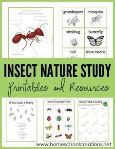 Insect Nature Study Printables - Learning About Bugs. A set of free printables from Homeschool Creations