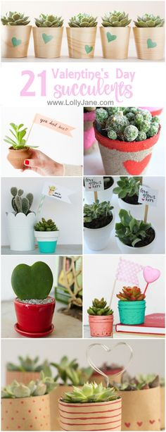 21 Valentines Succulents <3 Love this easy VDay gift idea! They're hard to kill and look pretty. Add a free tag and you've got a cute Valentines Day gift idea!