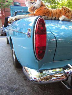 Sunbeam Tiger British Sports Cars, Classic Sports Cars, 2011 Camaro, Engin, Small Cars, Old Cars, Album, Vehicles, Hoods
