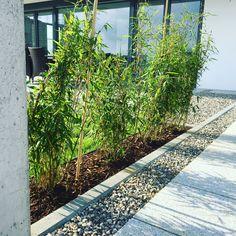 Bauhaus, Sidewalk, Plants, Modern Architecture, Architects, Villas, House Interior Design, Lawn And Garden, Side Walkway