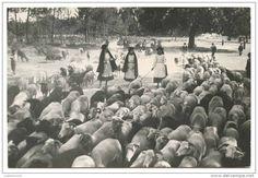 PORTUGAL - BEIRA ALTA - COSTUMES - Pastores carte postale