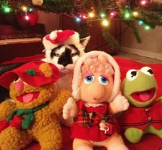 50 Pets In Christmas Costumes >**