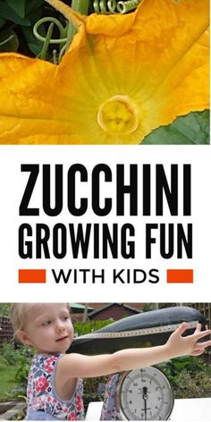 Gardening with kids - a super easy fun project for families and schools to grow zucchini plants in containers - a cool vegetable growing activity in the backyard or garden classroom for young children and older kids #kidsgarden #kidsgardening #kidsactivities #backyardideas #growvegetables #vegetablegardening