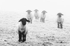 Nature in B&W / Black&White   Mmf-fotografie.nl