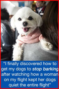 """I finally figured out how to get my dogs to stop barking after watching how a woman on my flight kept her dogs quiet the entire flight!"" Get Any Dog To Stop Barking Fast Pet Dogs, Dogs And Puppies, Maltese Dogs, Baby Dogs, Animals And Pets, Cute Animals, Dog Gadgets, Training Your Dog, Training Collar"