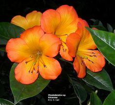 Lyon Aboretum, Oahu Hawaii (so many beautiful exotic plants here!)