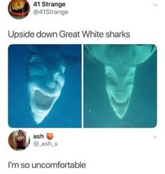Now you can read These Top 21 Monday Memes Shark and hopefully enjoy it, i'm sure you can. Because these Top 21 Monday Memes Shark are so funny and hilarious. 9gag Funny, Stupid Funny Memes, Funny Relatable Memes, Funny Stuff, Scary Funny, It Memes, 9gag Memes, Funny Monday Memes, Random Stuff