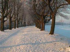 The Carpenters Walking in a Winter Wonderland