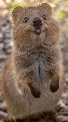 Cute Wild Animals, Baby Animals Pictures, Cute Little Animals, Happy Animals, Cute Animal Pictures, Cute Funny Animals, Animals Beautiful, Animals And Pets, Cute Dogs