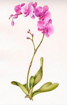Nicola Rabbett - NR1520 Pink Orchid Colour.jpg